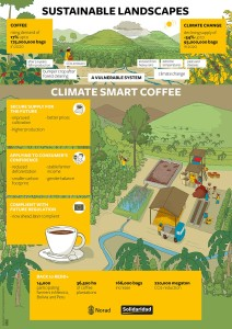 infographics sustainability landscapes coffee roaster crops Mexico Bolivia Peru diseases hand drawn conference Solidaridad climate smart agriculture water drought communities story telling rainforest